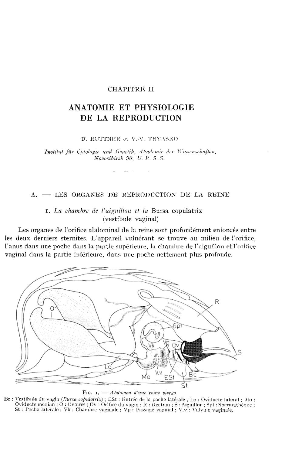 CHAPITRE II : ANATOMIE ET PHYSIOLOGIE DE LA REPRODUCTION | Apidologie